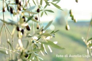 Frantoi Fotografici Fratticioli – IMG-in