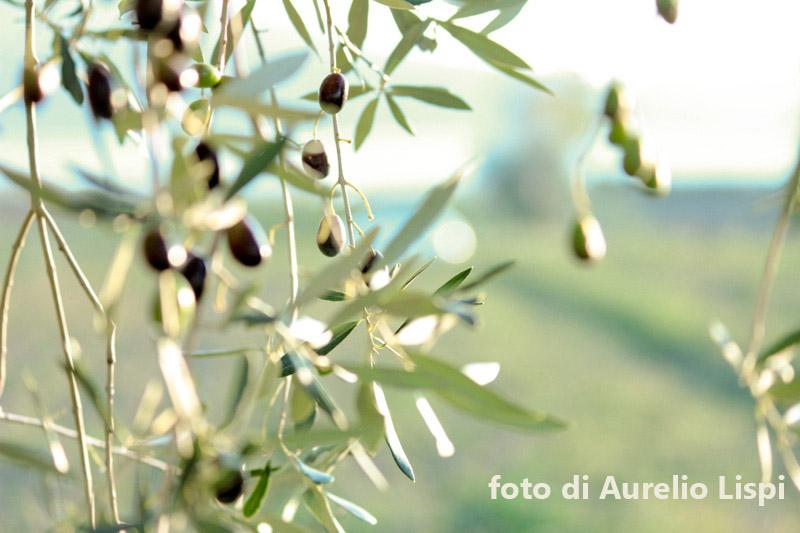 Frantoi Fotografici Fratticioli - IMG-in