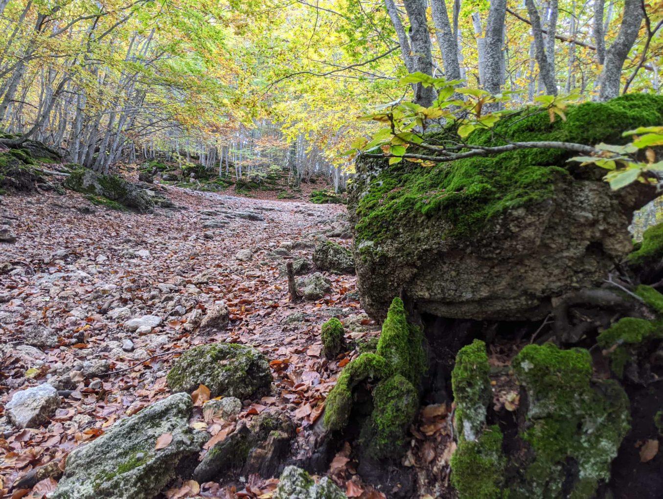 Esperienza fotografica nei boschi tra i magici colori autunnali