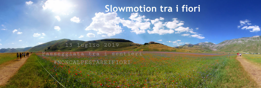 slowmotion tra i fiori