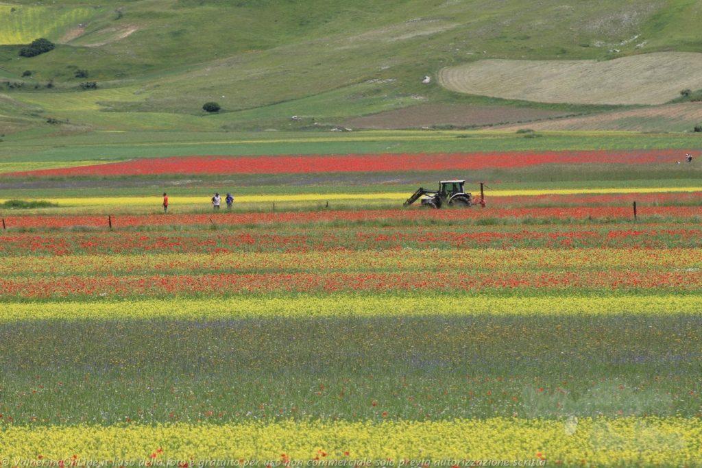 slowmotion tra i fiori fioritura 2014_strisce_di colore sul piangrande con trattore